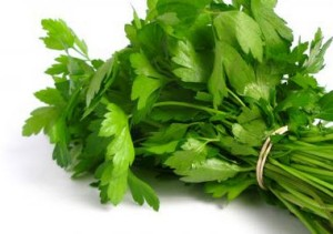 Parsley (Petroselinum crispum) is a bright green, biennial herb that is very common in Middle Eastern, European, and American cooking.